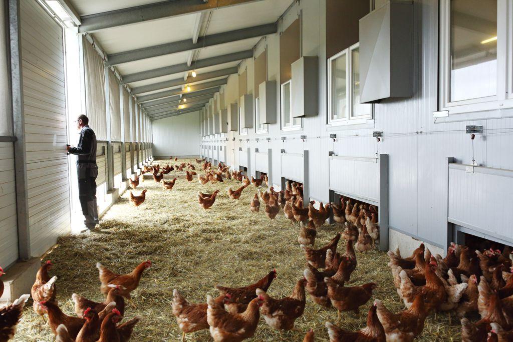 Im Wintergarten haben unsere Hühner bei jedem Wetter einen geschützen Bereich mit Luft und Bewegungsfreiheit.